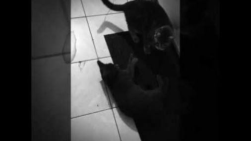 moment cats