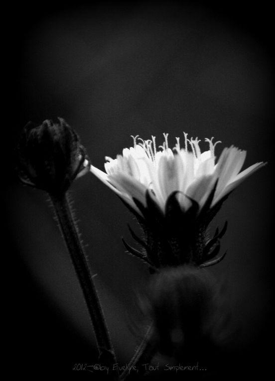 Album - Noir & Blanc, monochromes..