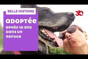 """4/ """"Mabrouk, chien d'une vie"""" /Comment un chien entre dans votre vie et pourquoi/ Histoire de Jimmy, chien bâtard retrouvé attaché dans la forêt de Marly sous prétexte qu'il n'était pas propre (pourtant il est devenu propre et très vite. Il fallait juste... s'occuper de lui comme nous le dira Jean-Pierre Hutin) & des séquences pleines de drôleries et de vérité + remarquable reportage 30 M d'Amis!"""