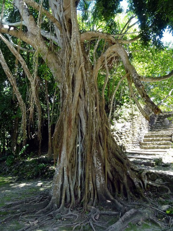 Mahahuala (Mexique)  Crooked Tree (Belize)