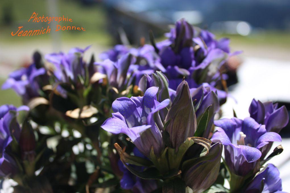 Vacances de l'année 2012 cueillette de champignons, promenade dans les alpages et fêtes de famille.