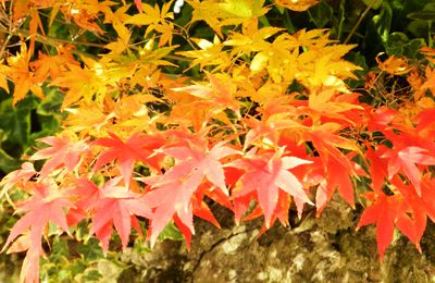 Calendario de jardinería de octubre