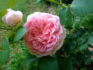 Abraham Darby et Othello