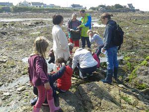 Des loupes à disposition permettent aux enfants de découvrir et d'observer d'étranges animaux fixés ou non sous les pierres.