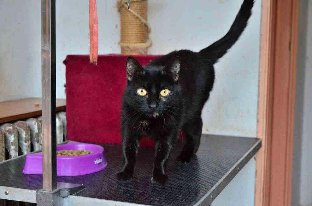 Elle est adoptée  : SYLVETTE, jolie chatte noire aux yeux dorés