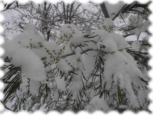 Prises de vues par Papou dans notre parc blanc de givre en décembre 2005.