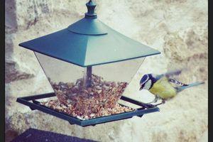 Les oiseaux, les mangeoires et l'hiver