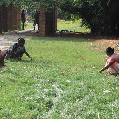 tondeuses à gazon écologiques au botanical parc