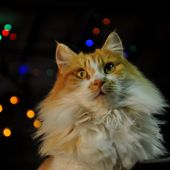 Spécial chats pour le 27 décembre 2016 - l'exposition de l'entre-fêtes