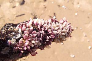petits trésors de la plage