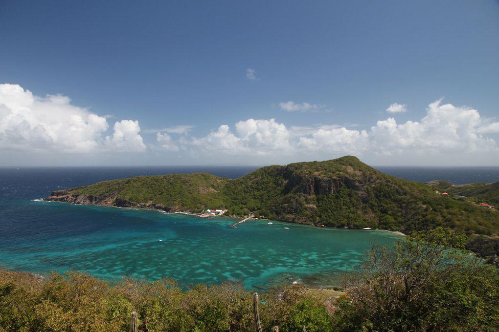 Section nostalgie - En Guadeloupe avec TonMoutard de 4 mois