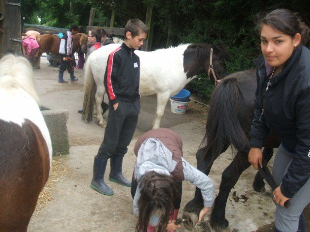 Album - poney-ce2