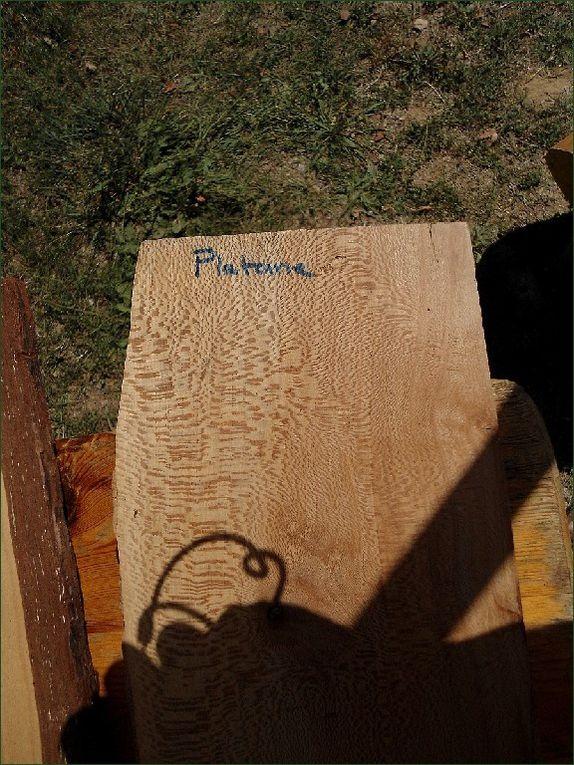 Au fil des bois...