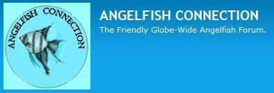 Angelfish Connection