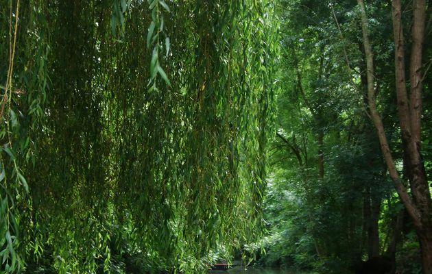 Sur les chemins d'eau...Le Marais Poitevin