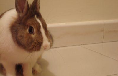 Il coniglietto nano: l'animale perfetto.