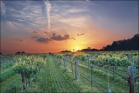 Arkansas Vineyard