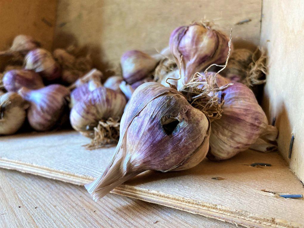 Les produits du collectifs de producteurs locaux dont les fameux haricots verts violets !