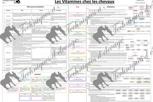 Nutrition, vitamines et cheval : le poster