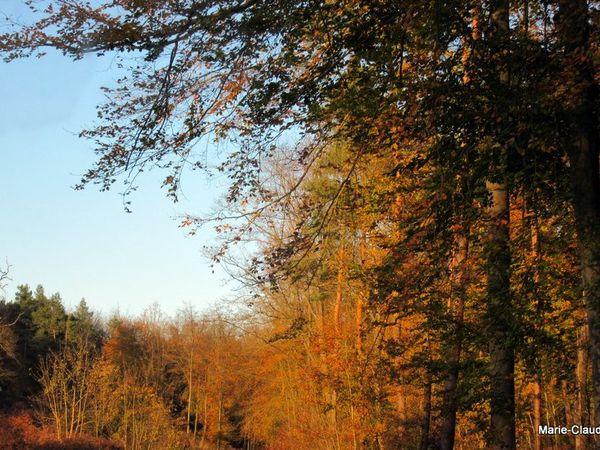 Derniers feux d'automne en forêt,