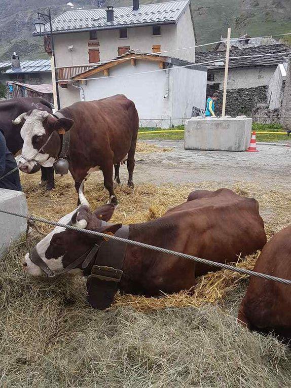 Bessans : retour sur le 12e Comice agricole de Maurienne