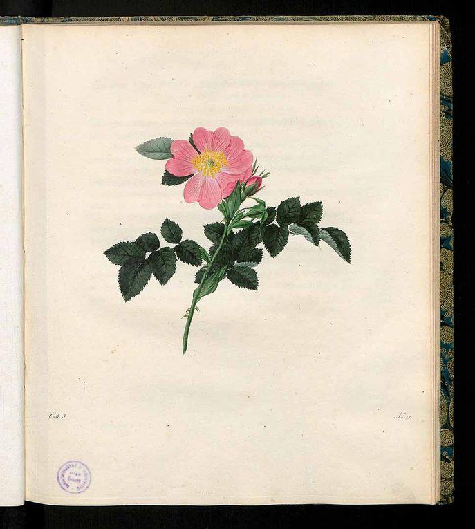 photo Roessig vol 01 1802