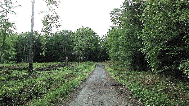 carrefour_Route Forestière de Sainte-Croix_Sentier (parcelle 95)