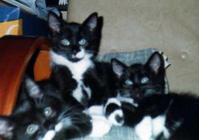 Dartagnan et ses soeurs