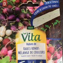 Semis de radis multicolore en ruban, en mars 2020 à l'extérieur