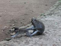 Bali: Ubud et la Monkey Forest