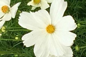 #flowerpower2015 semaine numéro... j'sais plus !