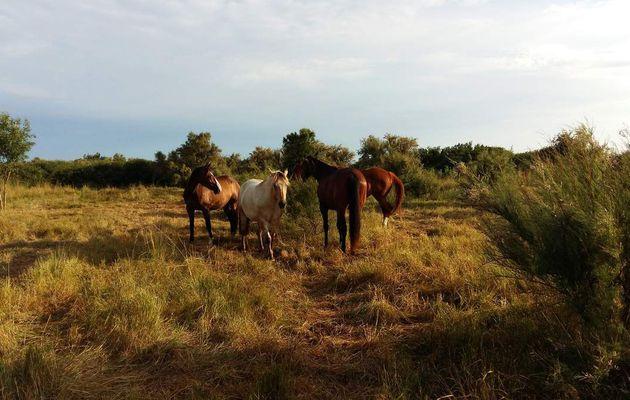 Comment trouver un pré pour nos chevaux ?