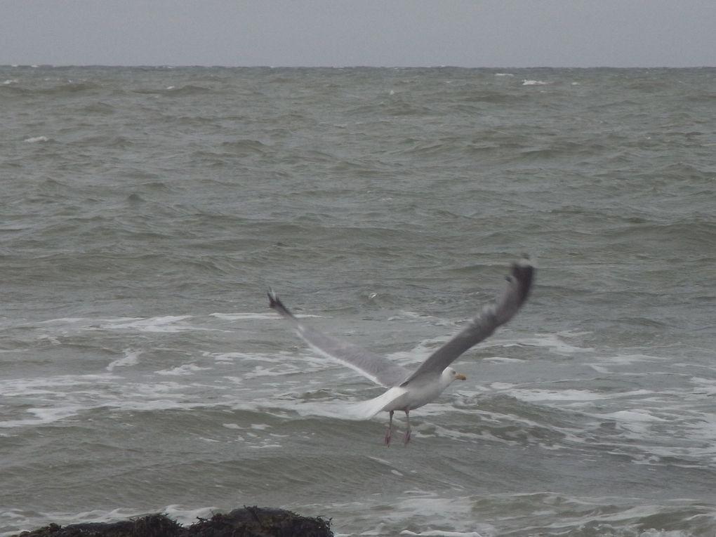 Front de mer et chemin côtier