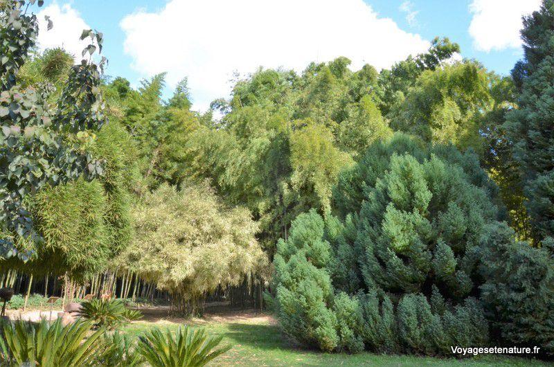 Anduze et la bambouseraie de Prafrance (30)