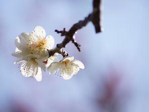 Kobé: Le grand parc Suma Rikyu Koen  須磨離宮公園