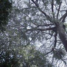 Voyage en forêts des pluies #3 :  Forêt primaire & secondaire