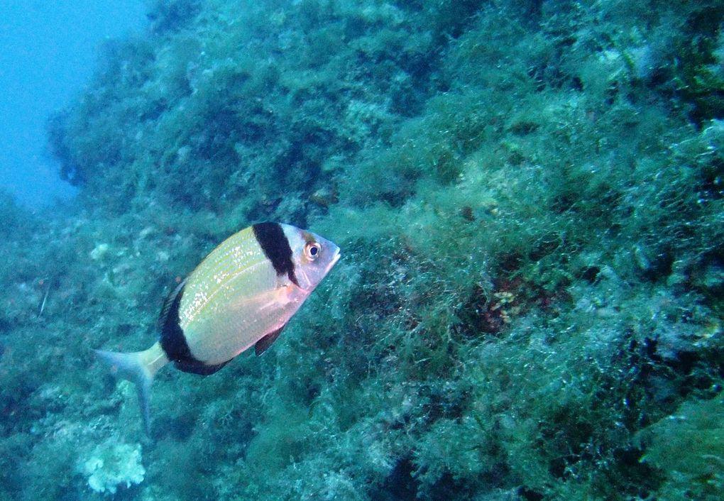 Week End à Port Cros... Superbes plongées...