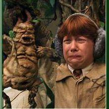 La Mandragore & Harry Potter : fiction et réalité...