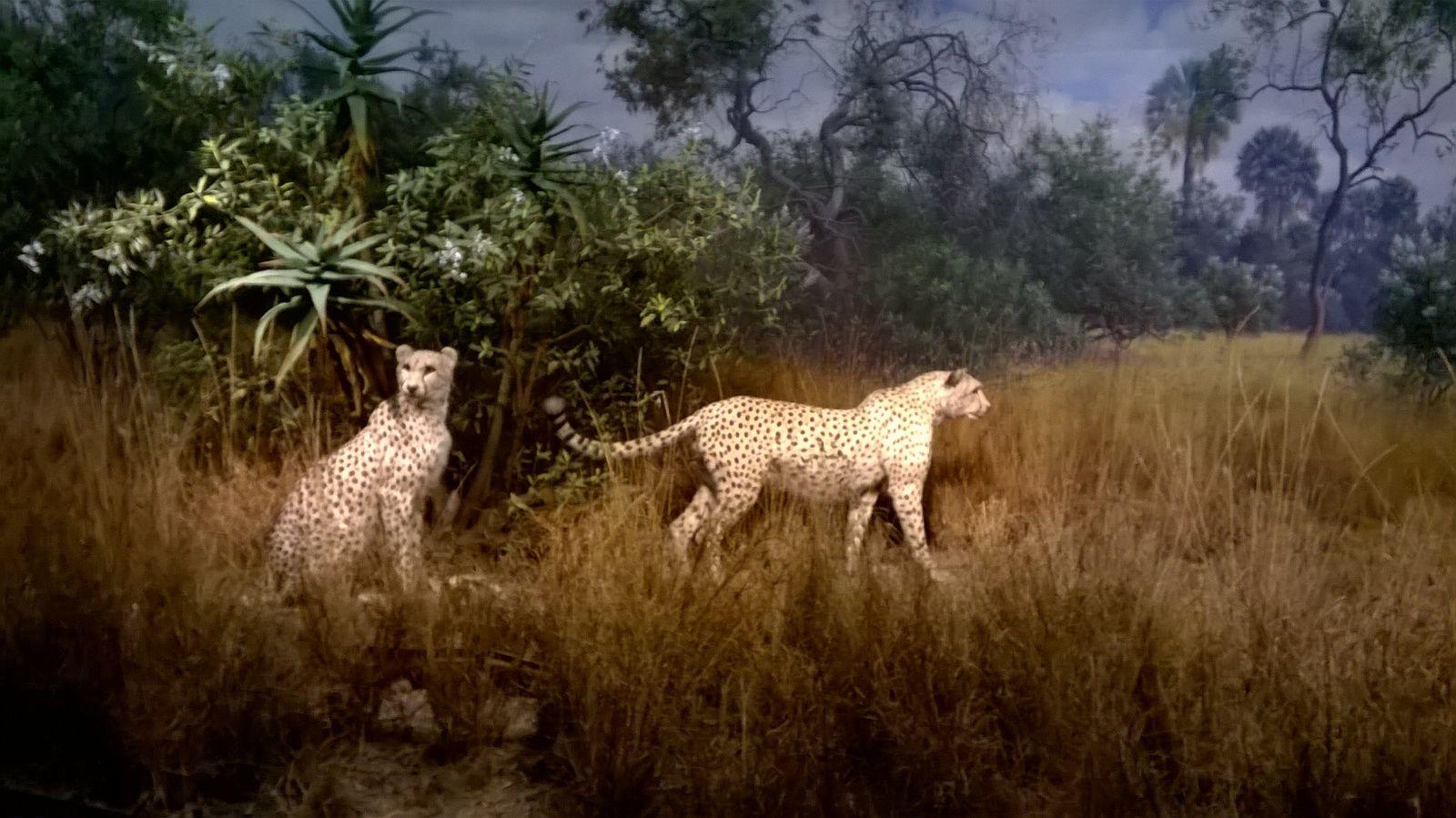 Le musée d'histoire naturelle de New York (1ère partie).