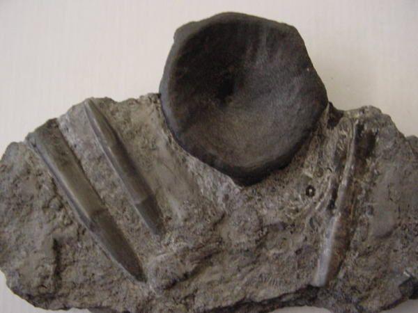 """<P>L'Alsace et surtout la bourse de Sainte-Marie-aux-Mines sont l'un de mes rendez-vous annuels !</p> <p>Outre les visites touristiques, les pièces provenant ou photographiées lors de cette bourse peuvent être admirées ici.</p> <p> Bon amusement !</p> <p>Phil """"Fossil""""</p>"""