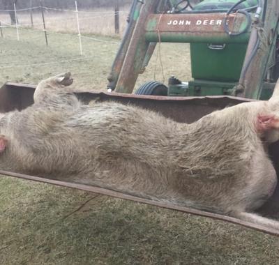 La chasse bas-rhinoise sous surveillance syndicale agricole : la FDSEA 67
