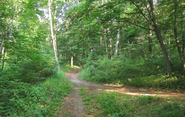 carrefour_vers le carrefour de l'Aisne_Sentier (parcelle 194)