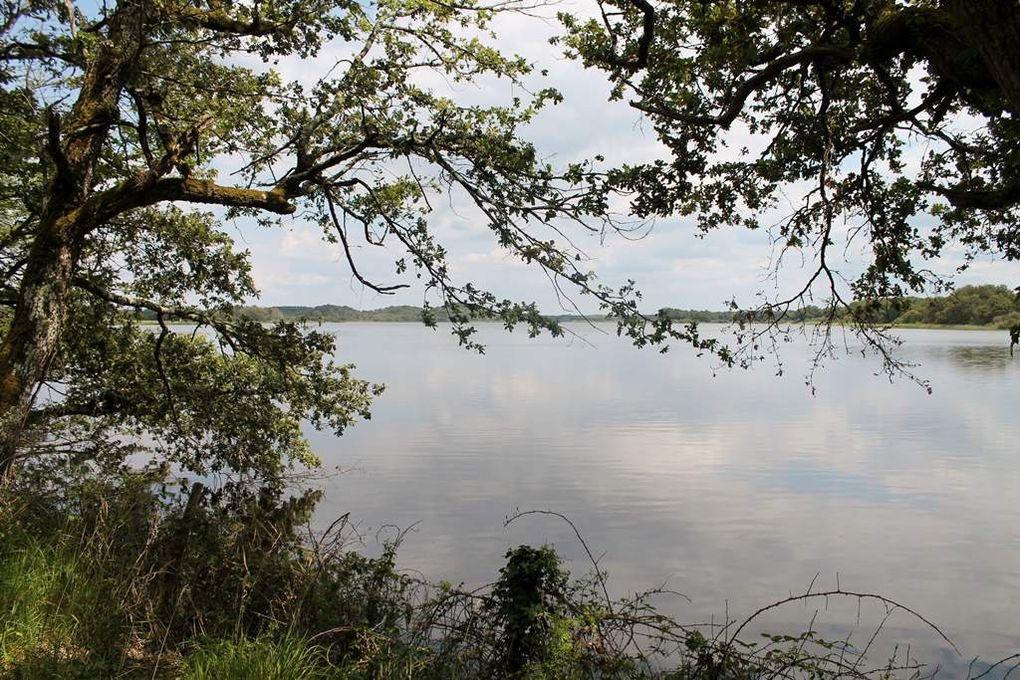 3 - Au pays des mille étangs
