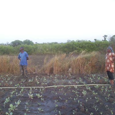 Les plantations vont bon train à Diamniadio!