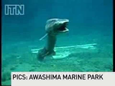 Un monstre requin-lézard découvert en Australie