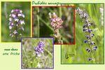 Florilège d'orchidées sauvages