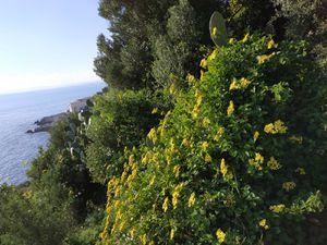 En haut, au  loin aperçu du Cap Ferrat