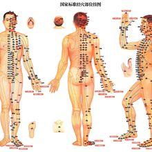 Le Dim mak, l'art des points vitaux (2ème partie) - Le méridien des reins