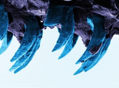 Des chercheurs découvrent un matériau biologique plus solide que la soie d'araignée !