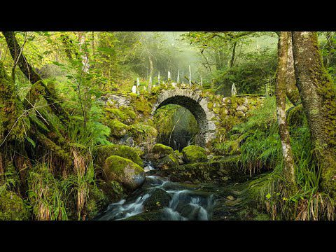 Celtic Forest...